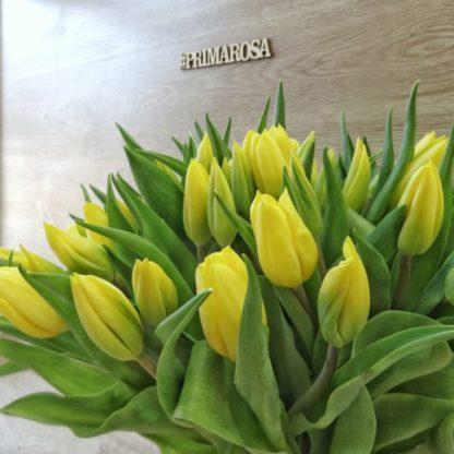 21 тюльпан разных цветов