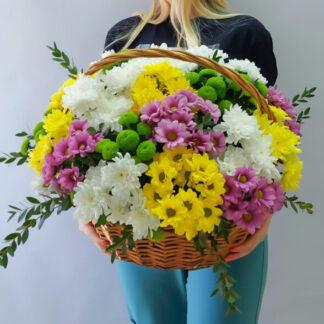 Хризантема кустовая с эвкалиптом, в корзине